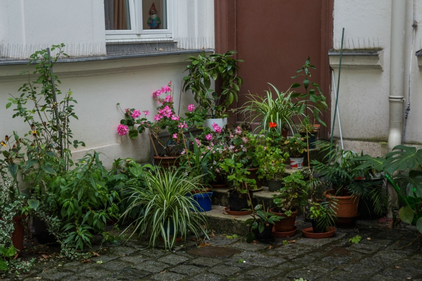 Wien2017_20170819_464