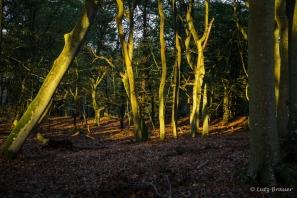 Bäume, Parks und Wälder