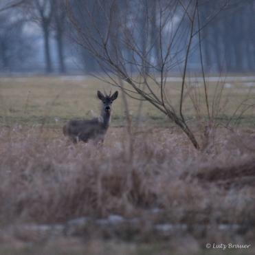Vorfruehling_20180323_129-2